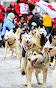 Iditarod2015_0135.JPG