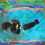 katten - 2011-02-25%2B06-07-37%2B-%2BIMG_0237.JPG