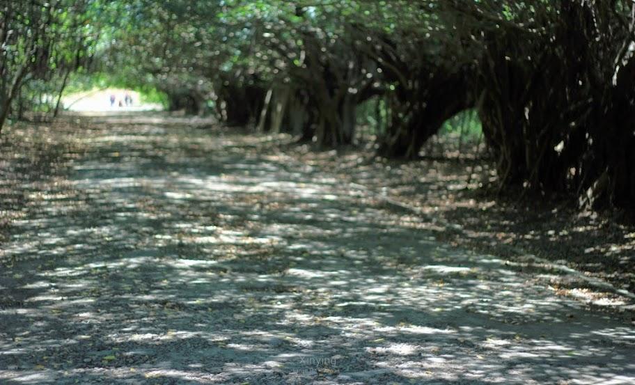 台南新營景點,長勝營區綠色隧道-4