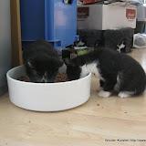 katten - 2011-04-06%2B10-12-09%2B-%2BIMG_0380.JPG