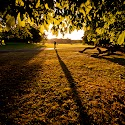 Evening Walk_Peter Moore.jpg
