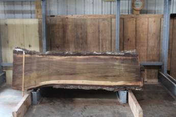 "568  Walnut -1 10/4 x  28"" x  22"" Wide x  8'  Long"