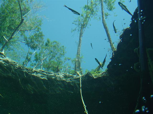 Klart vatten eller är det månne flygfisk