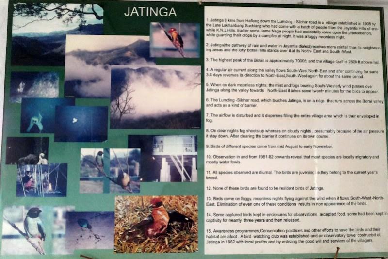 Details of different bird species - Jatinga bird-watching tower