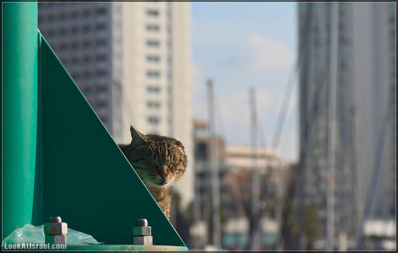 Тель Авивский морской кот