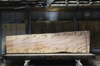 "600  Ambrosia Maple - 9 8/4x 34"" x 27"" Wide x  10'  Long"