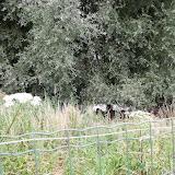 Westhoek aug 2013 - 15-8-2013%2B_%2B10_16_10%2BDSCF5068.JPG