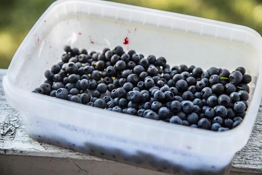 Svenske blåbær - Mikkel Bækgaards Madblog-18.jpg