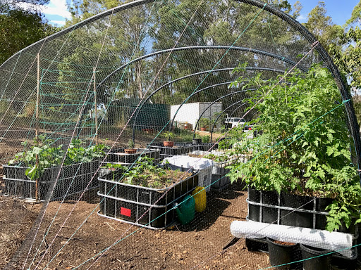 garden-planting-update-2017-03-19-09-38.jpg