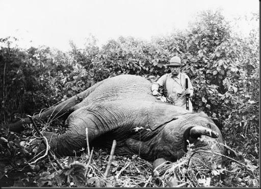 Game Roosevelt Teddy Taken Big
