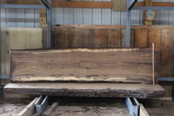 "571  Walnut -5 10/4 x 31"" x  25"" Wide x  10'  Long"
