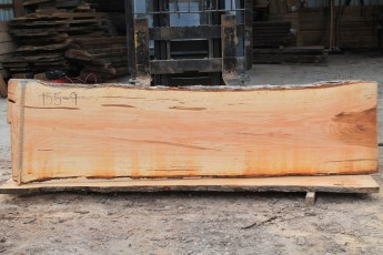 Hard Maple 155-9  Length 10' Max Width (inches) 34 Min Width (inches) 28 Notes 9/4 Some Curly Figure, LOTS of color Kiln Dried