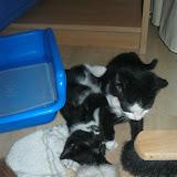 katten - 2011-04-15%2B19-07-05%2B-%2BIMG_0401.JPG