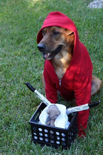 hunting dog costume