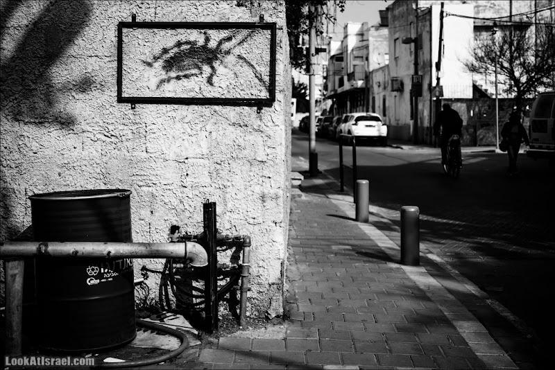 Граффити Тель Авива / Таракан как искусство