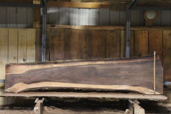 "607 Walnut - 15 5/4 x 31"" x 19"" Wide x  10'  Long"