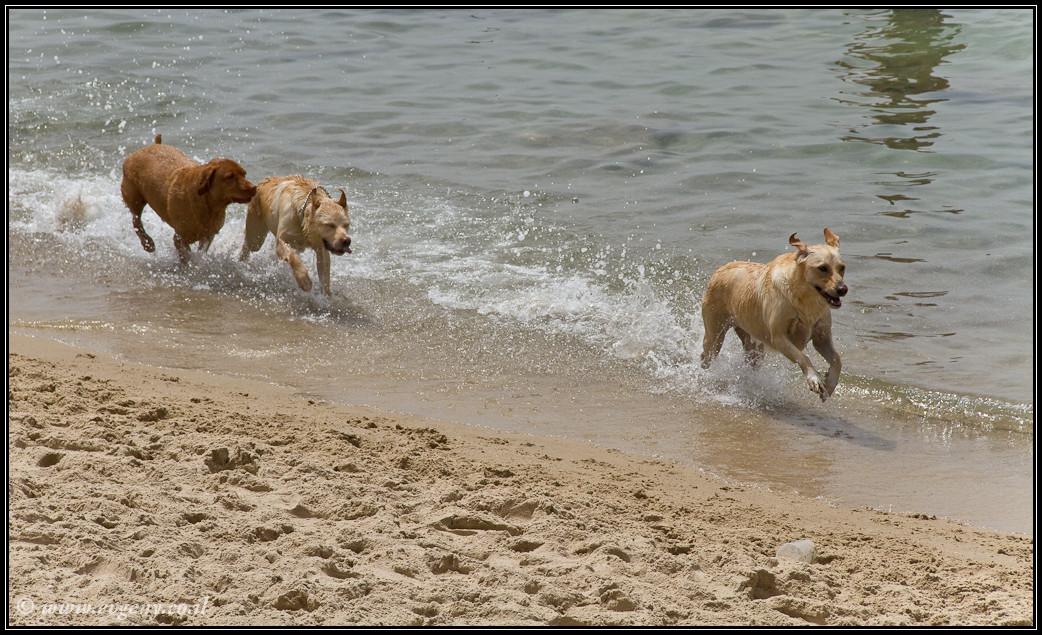 Пляжные собаки