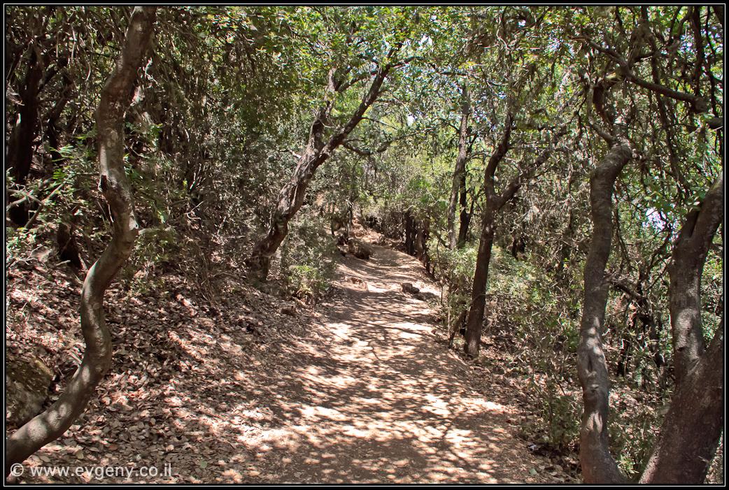 Гора Мерон   Mount Meron   הר מרון   LookAtIsrael.com - Фото путешествия по Израилю