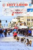Iditarod2015_0224.JPG