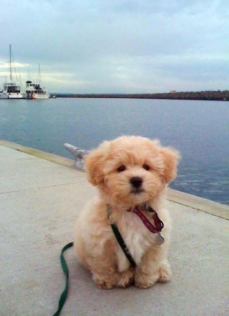 как приучить щенка к улице