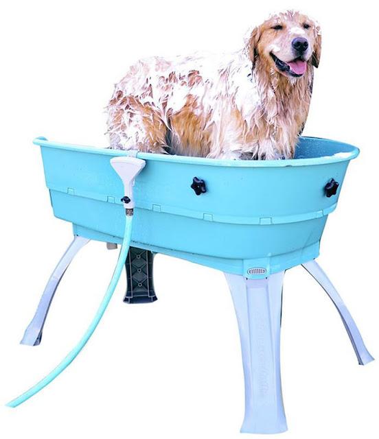 Собаку после прогулки мыть