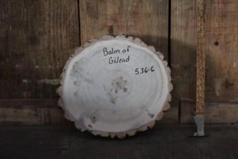 """536 Balm of Gilead -6  2 3/4""""x 14"""" Dia"""