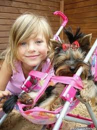 какую маленькую собаку завести ребенку