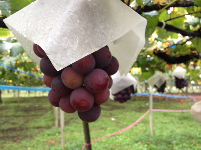 The crazy price of this crazy grapes is crazy