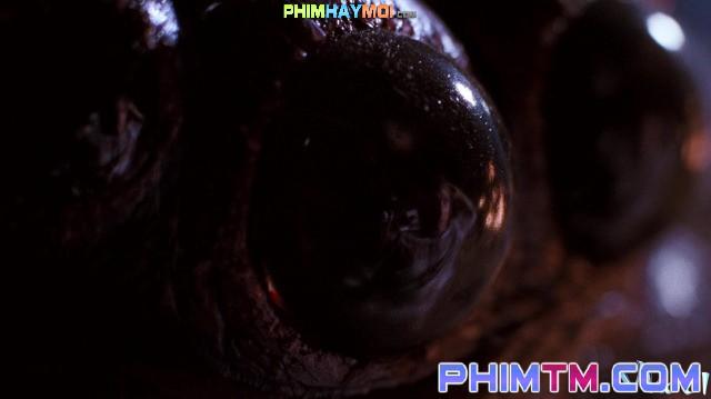 Xem Phim Nhện Sát Thủ - Arachnophobia - phimtm.com - Ảnh 4