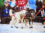 Iditarod2015_0374.JPG
