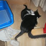 katten - 2011-04-15%2B19-07-21%2B-%2BIMG_0403.JPG