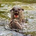 Primary 3rd - Otters_Bob Long.jpg