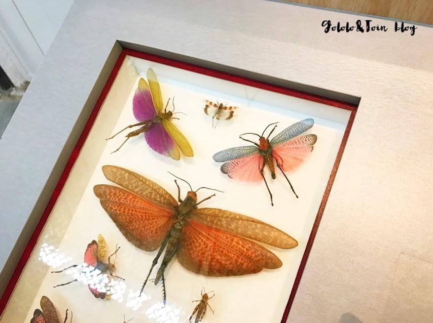 san-lorenzo-escorial-madrid-centro-naturaleza-insectos