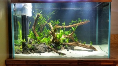 Vanish's 150G Tall DIY Underwater Island - The Planted ...