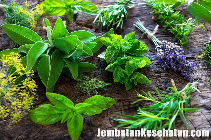 Pengobatan Herbal Gonore