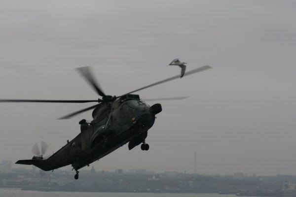 Hubschrauber machen Jagd auf Möwen