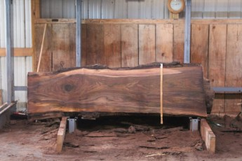 "552  Walnut -1 10/4 x  29"" x  22"" Wide x 8'  Long"