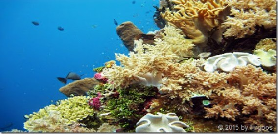 Terumbu karang laut wakatobi