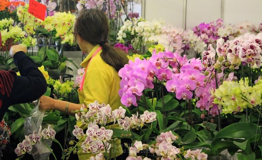 2015 台灣國際蘭花展時間-6