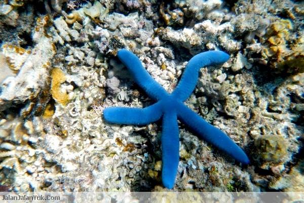 Ada Bintang Laut di Pulau Komodo