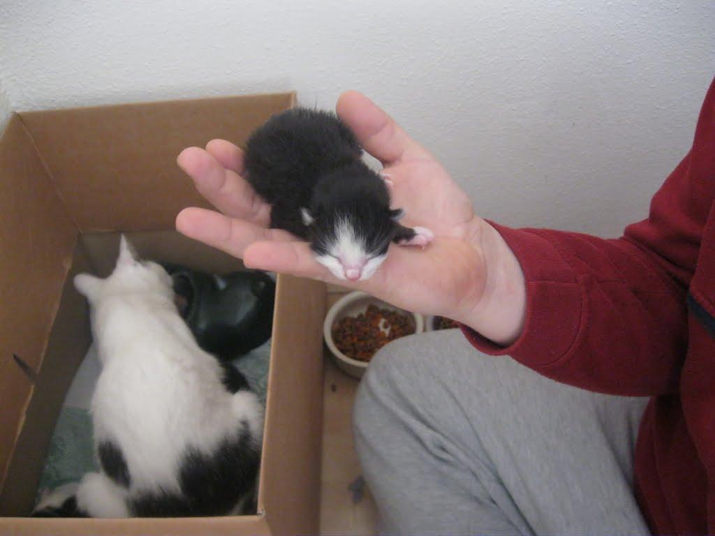 katten - 2011-02-26%2B12-08-12%2B-%2BIMG_0248.JPG