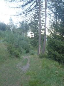Kurz vor z'Garten geht ein Singletrail quer durch den Wald. Der erste Teil ist einfach und schnell, der zweite (nach dem Überqueren der Strasse) ist schnell und technisch, Rock'n'Roll!