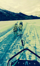 dogsledding 2.jpg