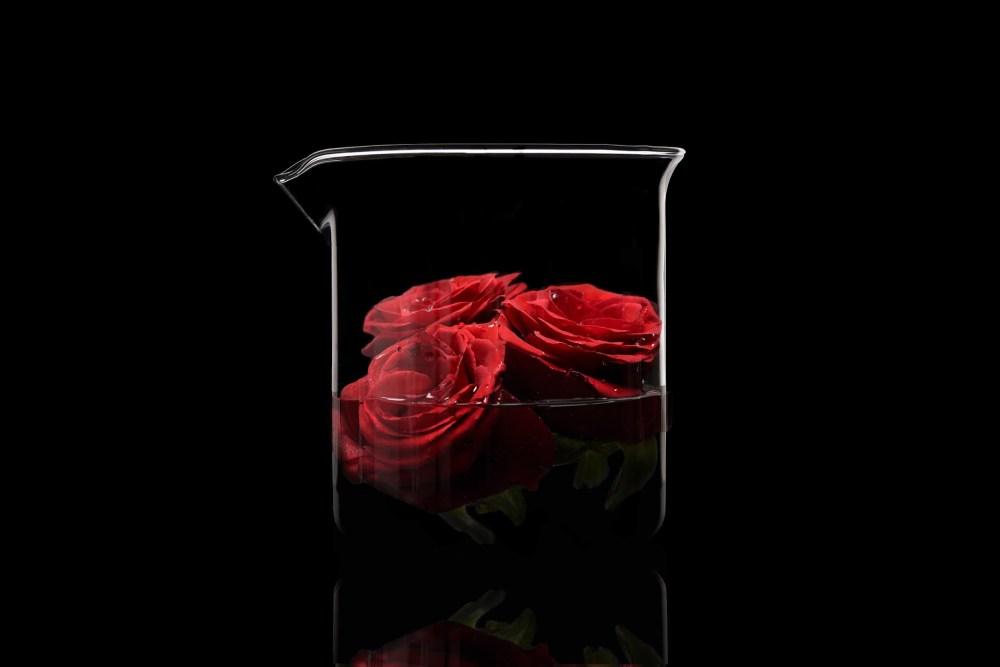троянди.jpg