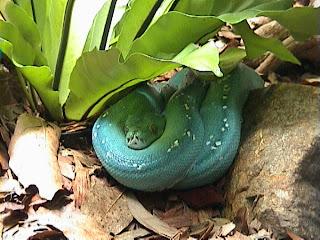 0150Tree Python