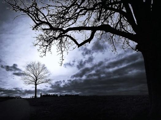 나무 사진 20140311 Sandra Deichmann