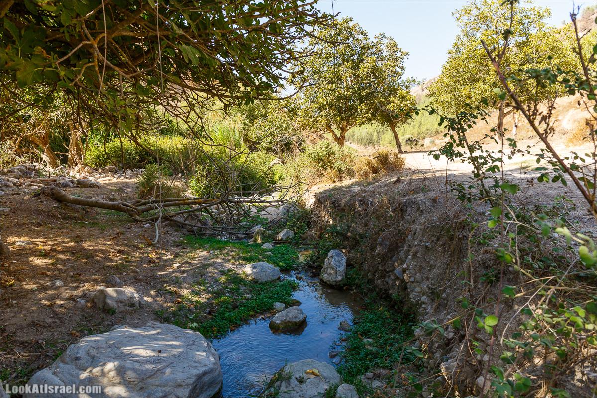 Ручей Гуш Халав   Nahal Gush Halav   נחל גוש חלב   LookAtIsrael.com - Фото путешествия по Израилю