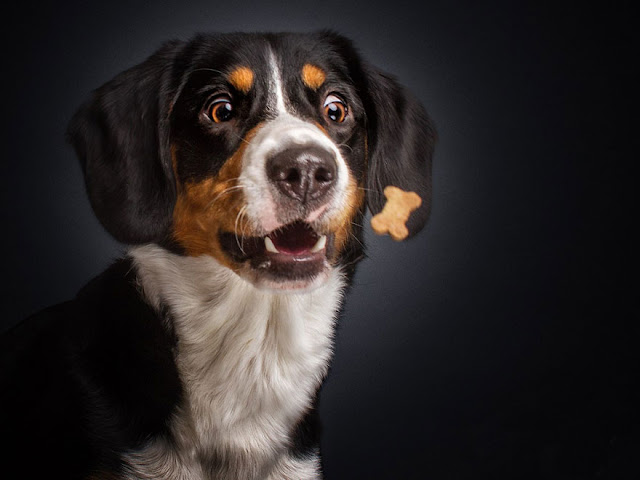 Можно ли собаке орехи