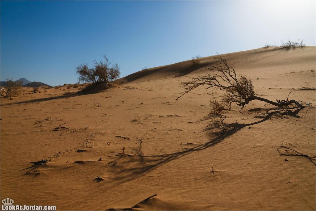 Дюна. Вади Ракиа | LookAtIsrael.com - Фотографии Израиля и не только...