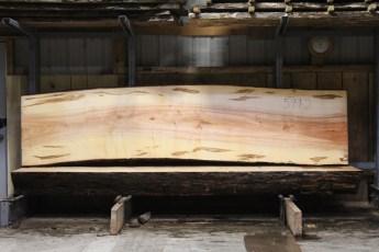 "599  Ambrosia Maple -2 10/4x 35"" x 33"" Wide x  12'  Long"